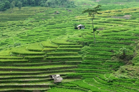 Sektor Pertanian Bisa Jadi Alternatif Kurangi Kemiskinan