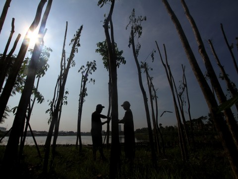 KLHK Dorong Penanaman Pohon Penyerap Timbel