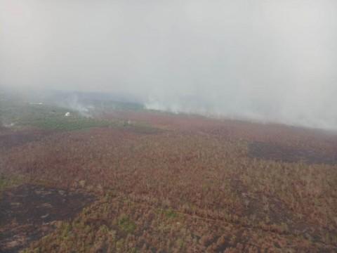 49 Titik Panas Terdeteksi di Kalimantan Tengah