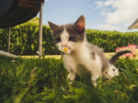 Kenapa Kucing Makan Rumput?
