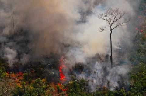 Brasil Kerahkan Tentara untuk Atasi Kebakaran Amazon