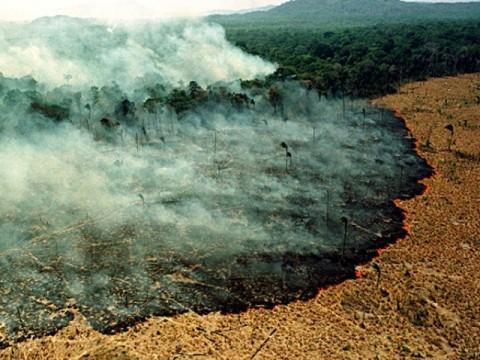 44 Ribu Militer Brasil Dikerahkan Lawan Api di Amazon