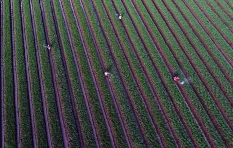 Pemanfaatan Lahan Lain untuk Pertanian Dinilai Dongkrak Ekspor