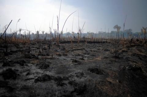 G7 Alokasikan Rp285 Miliar untuk Perangi Kebakaran Amazon