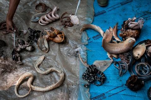 Satwa Awetan Kebun Binatang Bandung Dimusnahkan