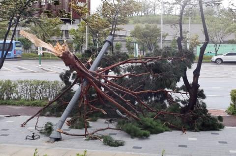 Korsel Berusaha Bangkit usai Diterjang Topan Lingling