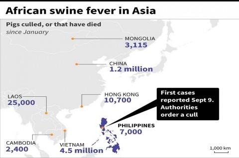 Filipina Konfirmasi Kasus Pertama Flu Babi Afrika