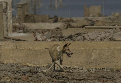 Ahli Pidana Diminta Bedah Kasus Anjing Bima Aryo