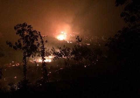 Sekitar 18.728 Hektare Lahan dan Hutan di Jambi Terbakar