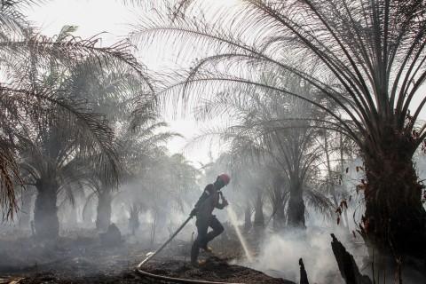 Tak Hanya ISPA, Masyarakat juga Harus Waspada Rabies saat Kabut Asap