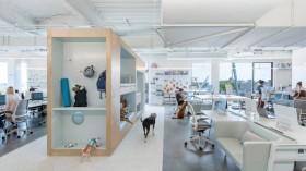 Desain Kantor yang Nyaman untuk Karyawan dan Anjingnya
