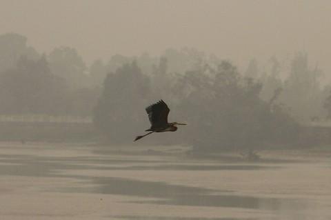 Kabut Asap di Pekanbaru makin Pekat