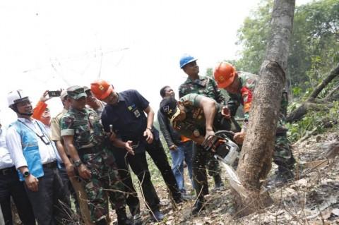 Pohon Tak Bisa Jadi Penyebab <i>Blackout</i>