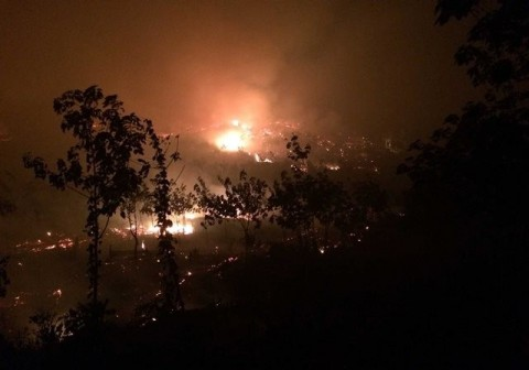Hutan NTT Paling Luas Terbakar