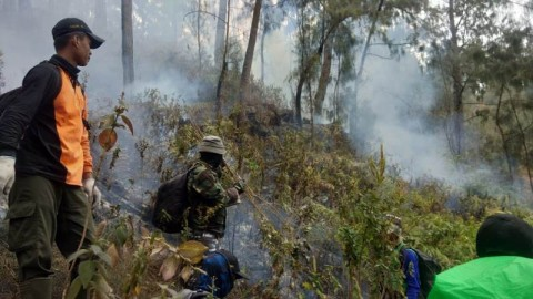 100 Hektare Hutan Gunung Arjuna Terdampak Kebakaran