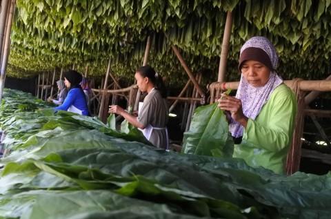 Buruh Terancam PHK Massal Imbas Kenaikan Cukai Rokok