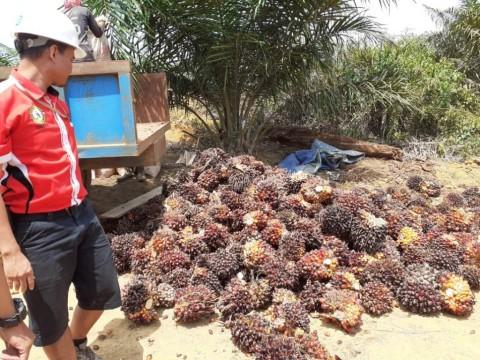 Tantangan Industri Kelapa Sawit Indonesia