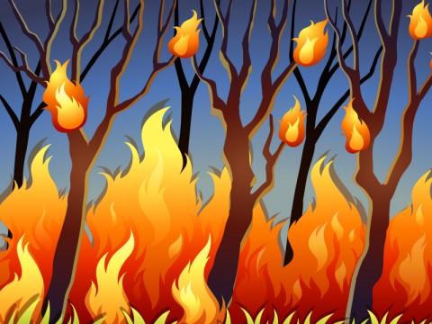 Hutan di Gunung Cikuray Terbakar