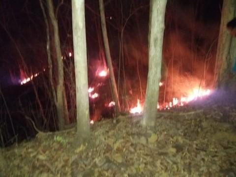 Lima Hektare Lahan Negara di Bantul Terbakar