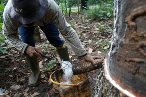 Rubber Producing Countries Agree to Protect Farmers