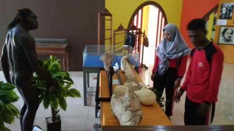 Fosil Purba Dipamerkan di Museum Kretek Kudus