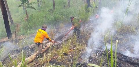 Hutan Pinus Oro-oro Ombo Terbakar