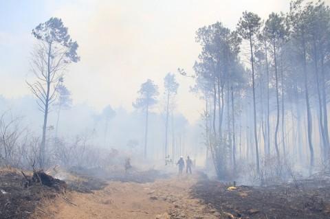 Lahan di Lereng Gunung Ciremai Terbakar