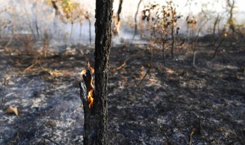 Suhu Panas Ancam Australia, Risiko Kebakaran Hutan Meningkat