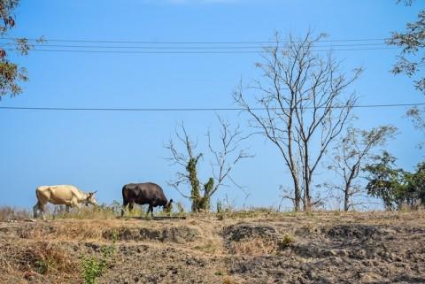 Nunukan Rawan Karhutla karena Cuaca Ekstrem