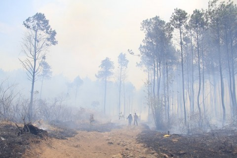 Kebakaran Kawasan Gunung Ciremai Hanguskan Sekitar 150 Hektare