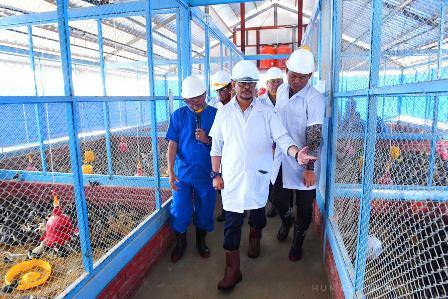 Mentan Dorong Industri Pembibitan Ayam Kampung di Sulawesi