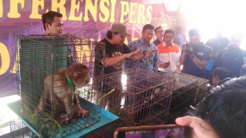 Penjual Satwa Langka di Medsos Ditangkap