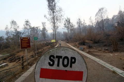 Status Tanggap Darurat Kebakaran di Banyuwangi Diperpanjang