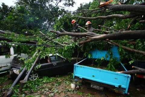Warga Tangsel Diminta Mewaspadai Pohon Rawan Tumbang