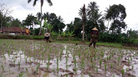 Perkembangan Industri Gerus Ruang Pertanian