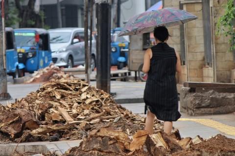 Penebangan Pohon di Ibu Kota Bakal Dilanjutkan