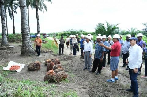 Pengelolaan Sawit di Riau Dapat Menginspirasi Banyak Negara