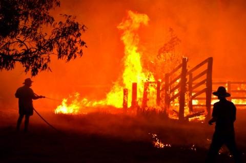 Kebakaran Hutan Australia Landa Pinggiran Sydney