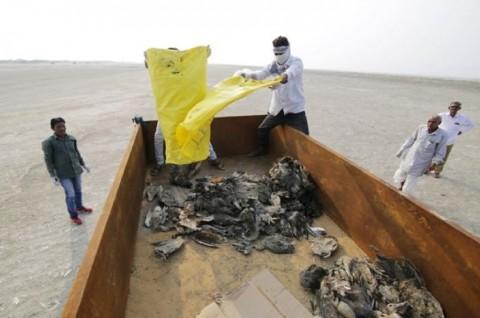 1.000 Burung Mati Secara Misterius di Danau India