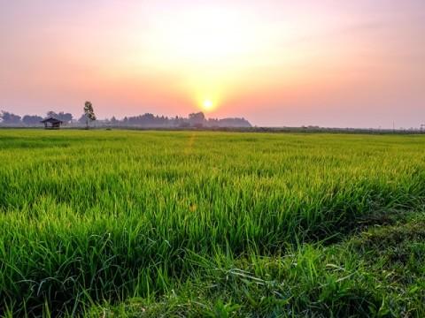 Sinkronisasi Dana Pertanian Segera Dirampungkan