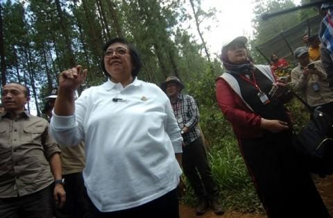 Program Rehabilitasi Hutan Serap 8,2 Juta Tenaga Kerja