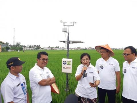 Petani di Situbondo Gunakan Teknologi 4.0 Dalam Berkebun
