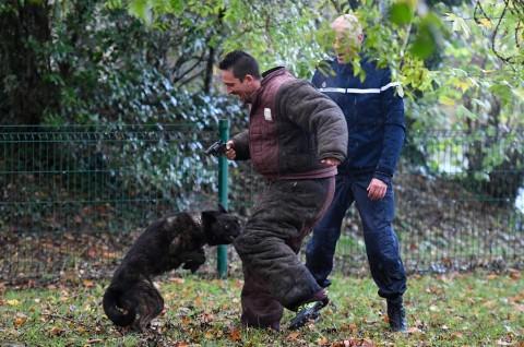 Wanita Hamil Tewas Diserang Anjing di Hutan Prancis