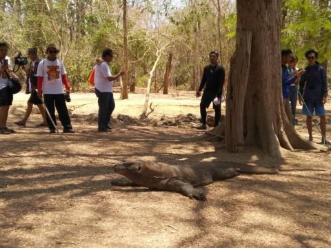 Kunjungan ke Pulau Komodo Tak Terpengaruh Pemberitaan Negatif