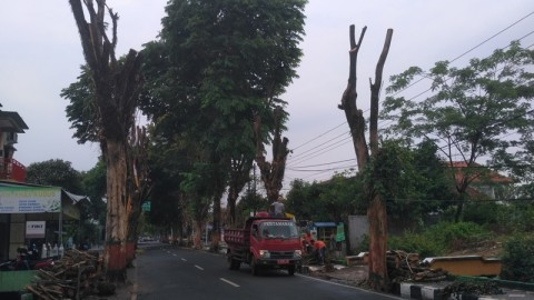 DLH Pangkas Pohon Rawan Tumbang