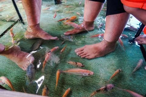 Nikmati Sensasi Makan Soto Sambil Digelitiki Ribuan Ikan