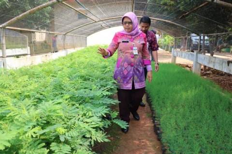349 Hektare Lahan di Jepara Dinyatakan Kritis