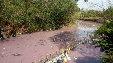 Sungai di Cirebon Keruh dan Berwarna Pink