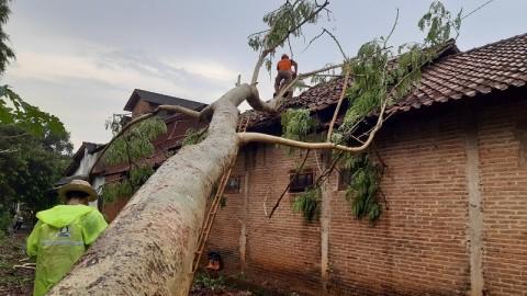 Angin Kencang di Jepara Tumbangkan Pohon