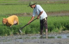 Pertanian Meredam Krisis